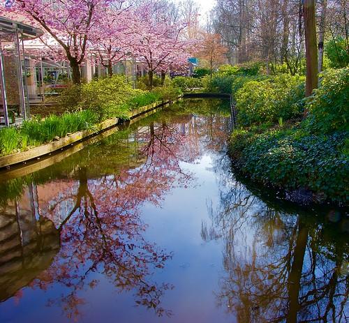 flower netherlands amsterdam gardens iamsterdam keukenhof