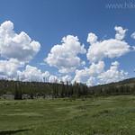 Cascade Creek meadow