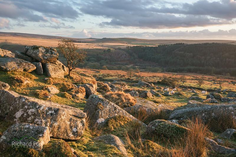 Moorland sunlight