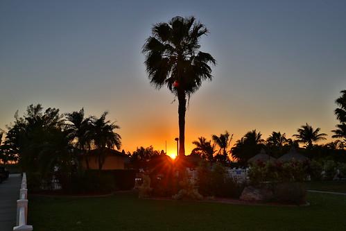 sunset vacation sky usa sun holiday tree strand america canon stpetersburg lens landscape sonnenuntergang unitedstates florida outdoor urlaub pflanze himmel landschaft sonne palme baum stpetebeach