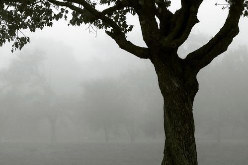 trees mist tree nature fog landscape texas houston bayou labrume janbuchholtz