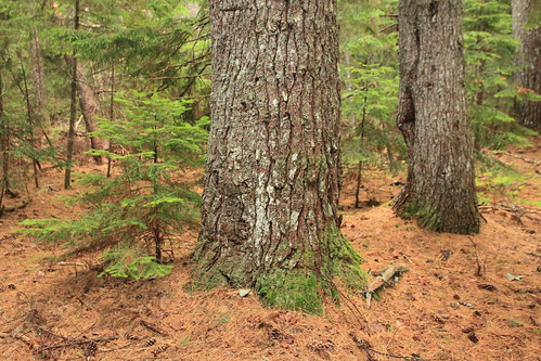 park pine nationalpark parks nationalparks kouchibouguac kouchibouguacnationalpark