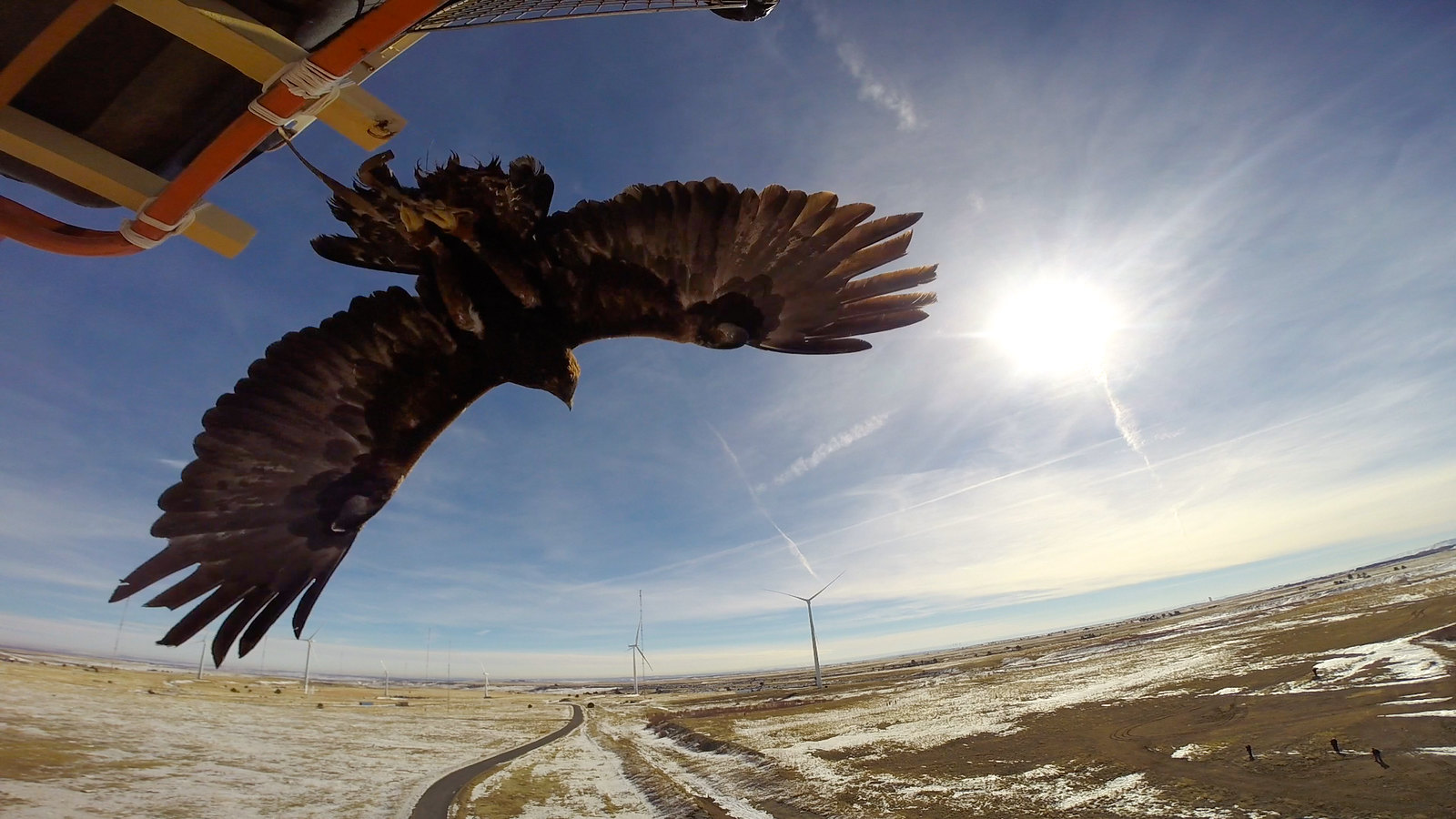 photo of eagle and wind farm