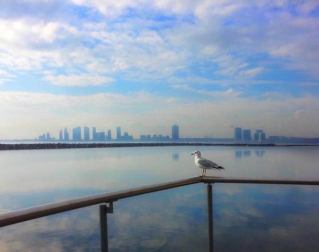 Toronto Ontario Canada ~ Lake Ontario ~ Skyline and Sea Gull