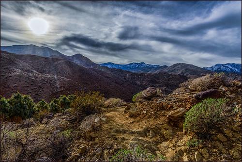 california us unitedstates ngc palmsprings palmcanyon indiancanyon martinsmith aguacalienteindiancanyons nikond750 ©martinsmith