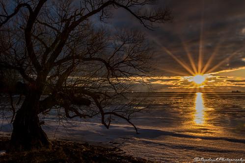 sun tree sunrise river landscape soleil exterior horizon riviere paysage arbre exterieur
