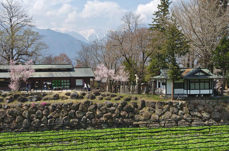 Alpes japonaises, cerisiers et wasabi