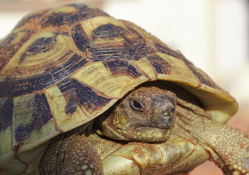 The tortoises wake up