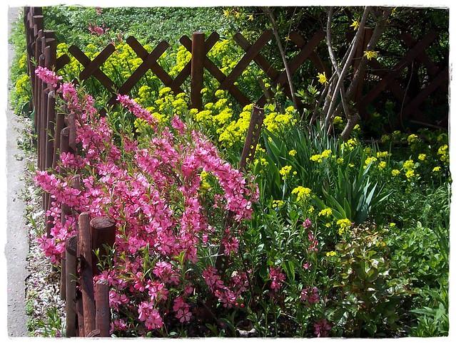 Spring moment-Tavaszi pillanat
