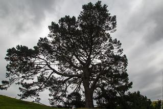 NZ_14-52   by koliaest