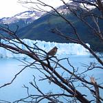 Mo, 21.12.15 - 14:46 - Glaciar Perito Moreno