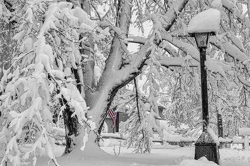 trees winter usa snow nature landscapes colorado seasons unitedstates snowy longmont flag branches american snowstorms jamesinsogna