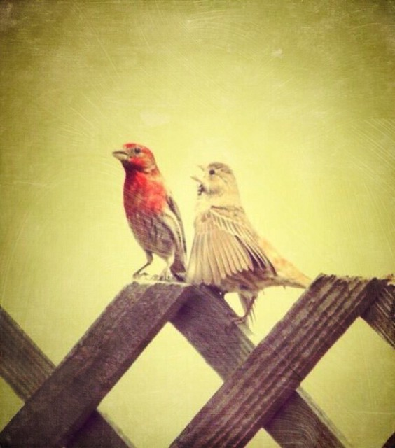 I want to sing like the birds sing, not worrying who hears or what they think.