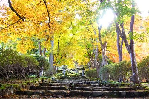 高源寺 kogenji tamba hyogo kansai japan 兵庫県 丹波市 autumnaltints 紅葉
