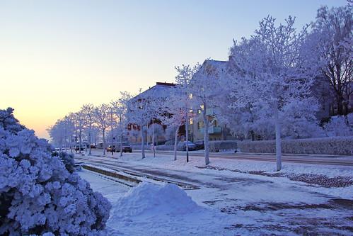 Magic frozen trees, Helsinki   by Andrey Sulitskiy