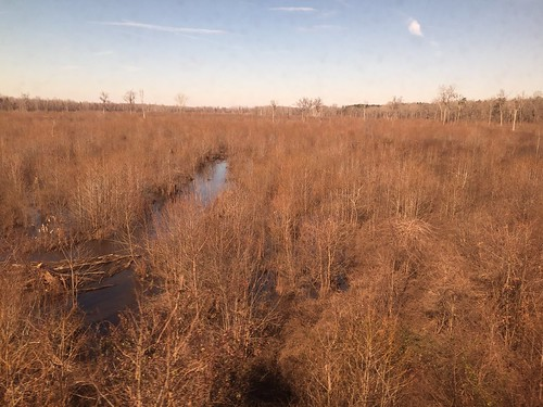 southcarolina nationalforests amtrakviews swampsandmarshes