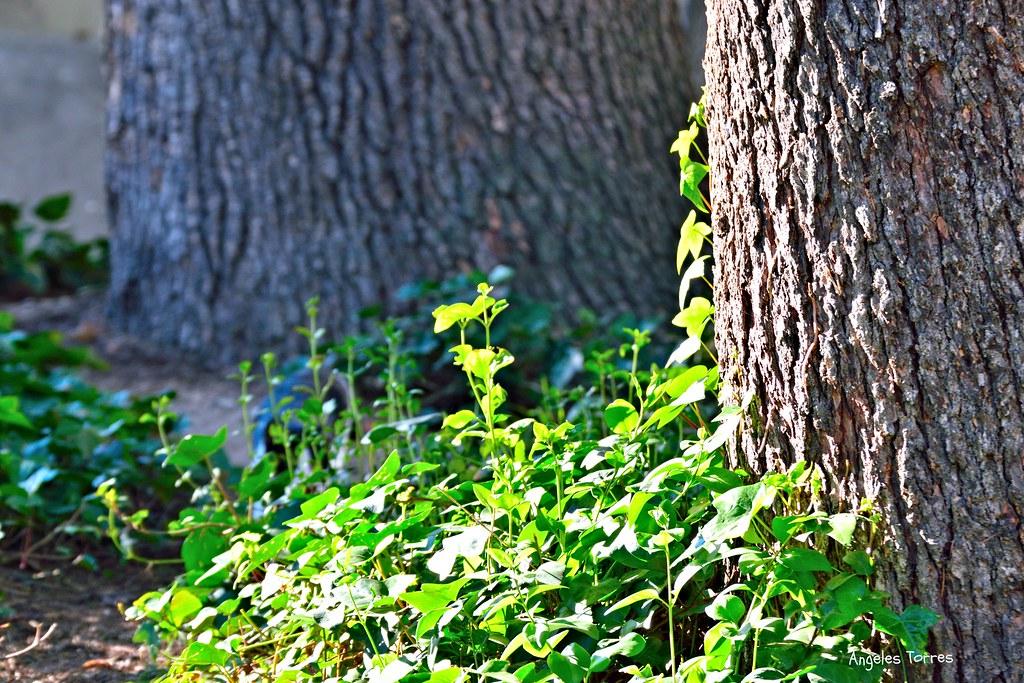 Detalle de troncos de árbol