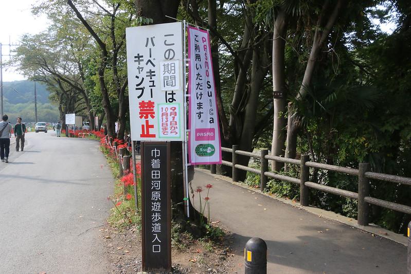 2014-09-23_00069_巾着田.jpg