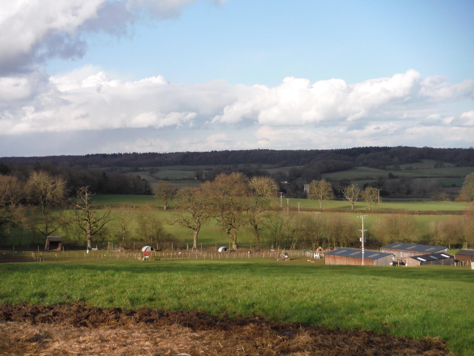 Hawkridge Wood across the Pang Valley, from Bucklebury Farm Park SWC Walk 117 Aldermaston to Woolhampton (via Stanford Dingley)