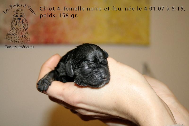 Chiot 4