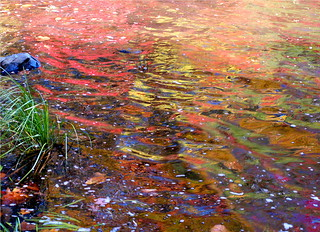 Fall leaves in water  4