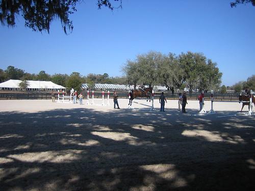 bill molly hits horseshow ocala schoolingring
