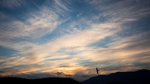 sunset sky cloud bird clouds flying perfect hobart mtwellington kunanyi