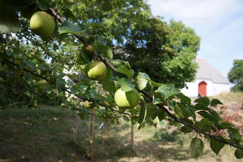 Tjoernbjerg-Have-2014-07-24 (3)