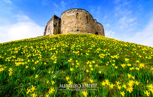 york uk blue england sky flower building tower english heritage yellow spring nikon yorkshire hill north daffodil sprung cliffords