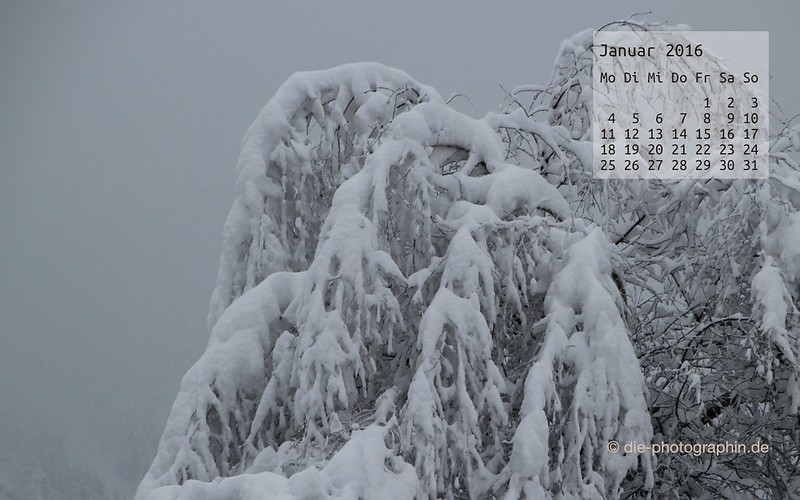 baeumemitschnee_januar_kalender_die-photographin