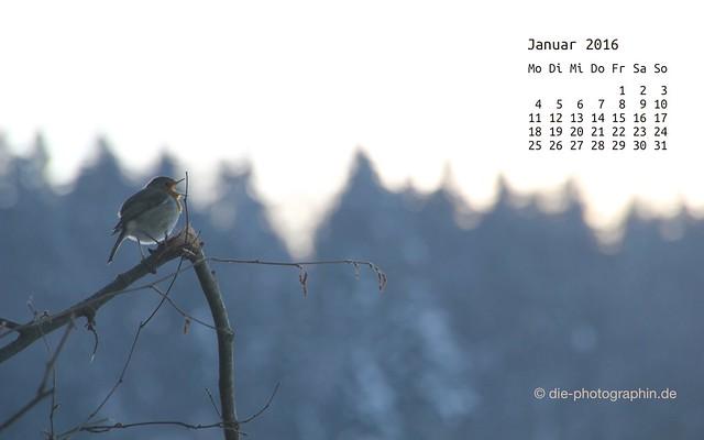rotkehlchen_januar_kalender_die-photographin