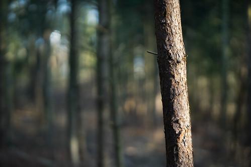 Forest II | by Jannik Peters