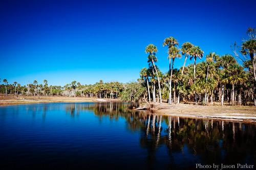 wild sky nature water sunshine river landscape florida outdoor sunny bluesky palmtree naturalbeauty polarizer econ centralflorida econlockhatchee rvier vsco ecoriver vscofilm