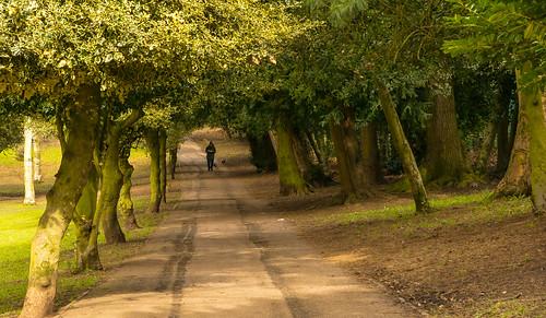 uk trees england green landscape spring nikon outdoor avenue westmidlands dogwalker blackcountry 2016 hadenhillpark d7100 tamronf282470divcusd