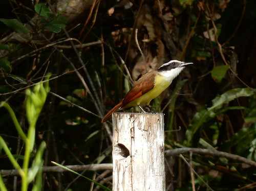 Rio Lagartos - Balneario El Chiquila - hike - bird