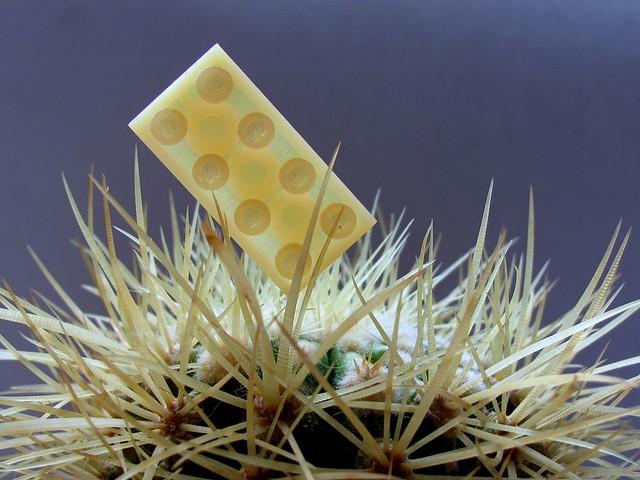 BASF Cactus brick