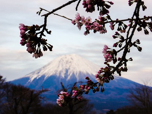 pink mountain lake tree japan cherry landscape volcano fuji blossom bokeh mountfuji cherryblossom sakura fujisan buds