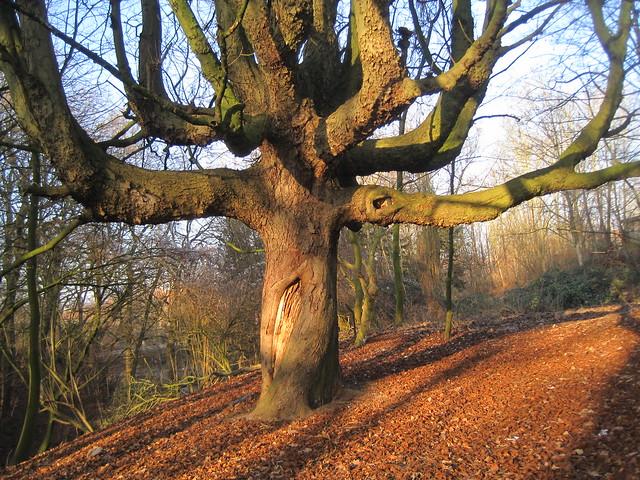 ein starker Baum im Park