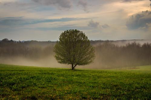 mist tree field fog clouds canon landscape scenic serene t5i davidsharo