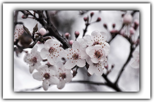 Floraison hivernale
