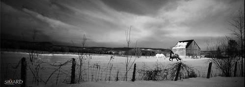 "soleil photos hiver nb arbres neige pontiac nuages animaux campagne ferme forêt ""nikonflickraward"" simpa©"