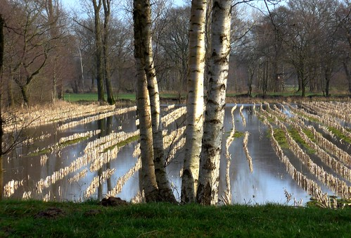 blue trees winter light sky white tree green nature water field germany de landscape photography photo europe birch flooded lowersaxony wörpe