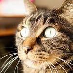 こげの日光浴 #こげ #猫 #cat #koge #朝日 #morning