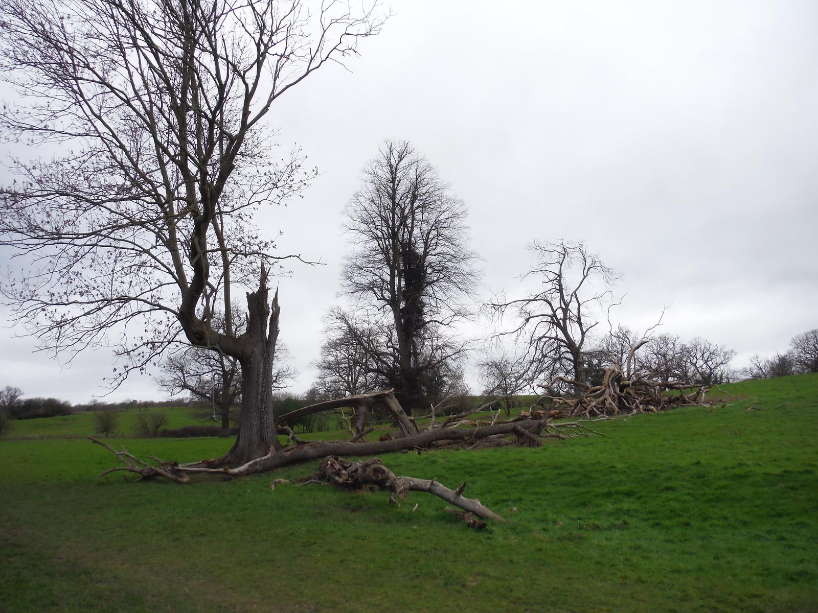 Trees in Spittal Brook Valley SWC Walk 168 Broxbourne Circular