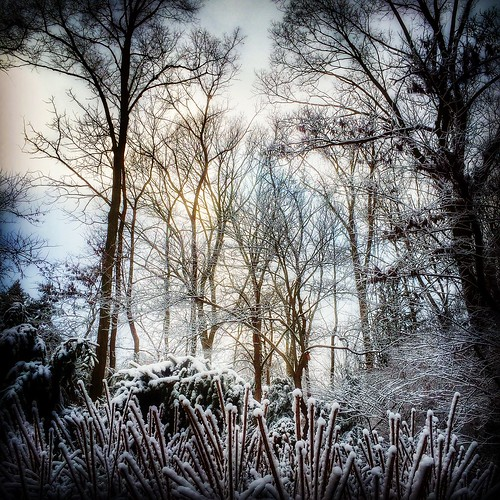 winter ohio snow nature beauty landscape peaceful calm dayton jimcrotty iphonegraphy ohionaturephotography ohiolandscapephotography niksnapseed