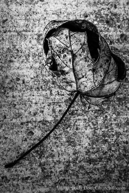 003•366 • 2016 • dry leaf on concrete