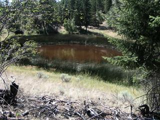 Cartwright pond1