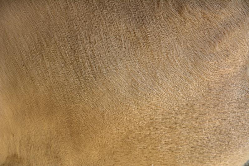 animal-fur-closeup-texturepalace-16