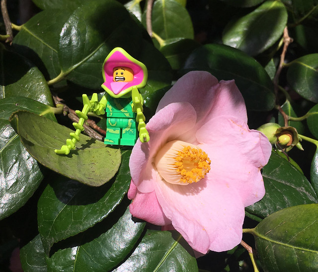 LEGO Collectible Minifigures Series 14 : Plant Monster