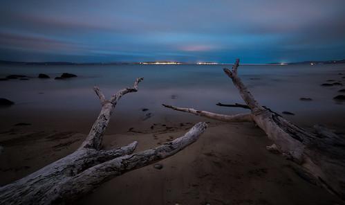 longexposure sky tree beach water night waves shoreline shore fallen tasmania hobart derwentriver 14mm taroona samyang hinsbybeach